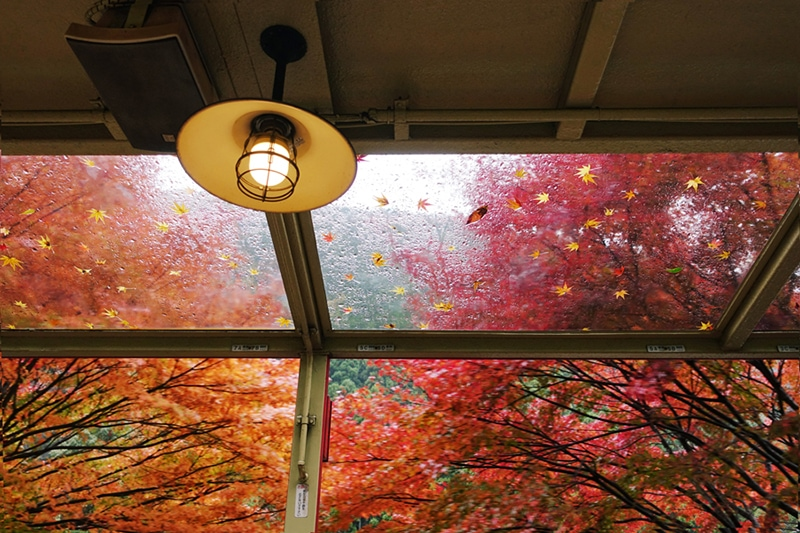 old lamp inside with fall foliage